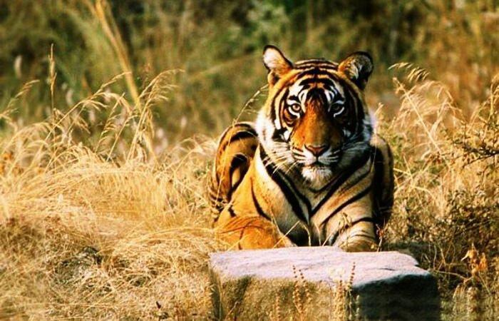 با رفتن به این مناطق در هند، بهترین حیات وحش را ببینید!