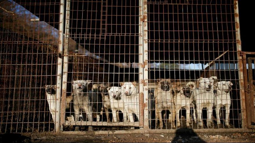 درخواست مقامات ویتنام از ساکنان هانوی ، گوشت سگ نخورید