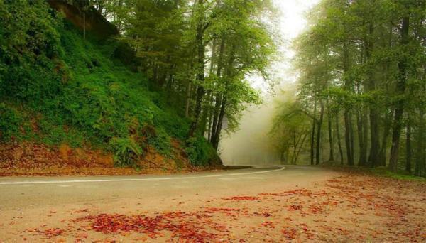 جنگل دالخانی یا دالان بهشت؛ جنگلی نیمه کوهستانی در رامسر