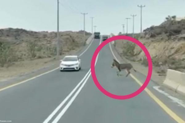 تصادف خودرو با یک الاغ